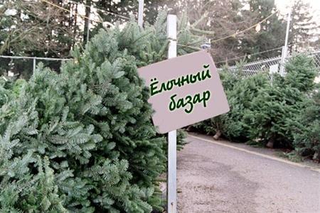 Сколько будет стоить елка